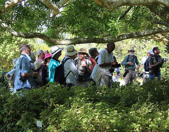 Kirstenbosch Bird Walk